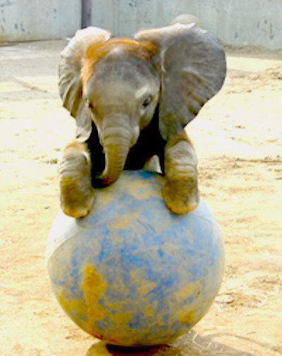 Baby-elephant-plying-wallpaper